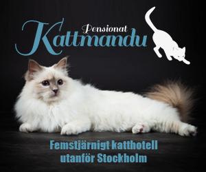 Kattmandu - ett kattpensionat med klös