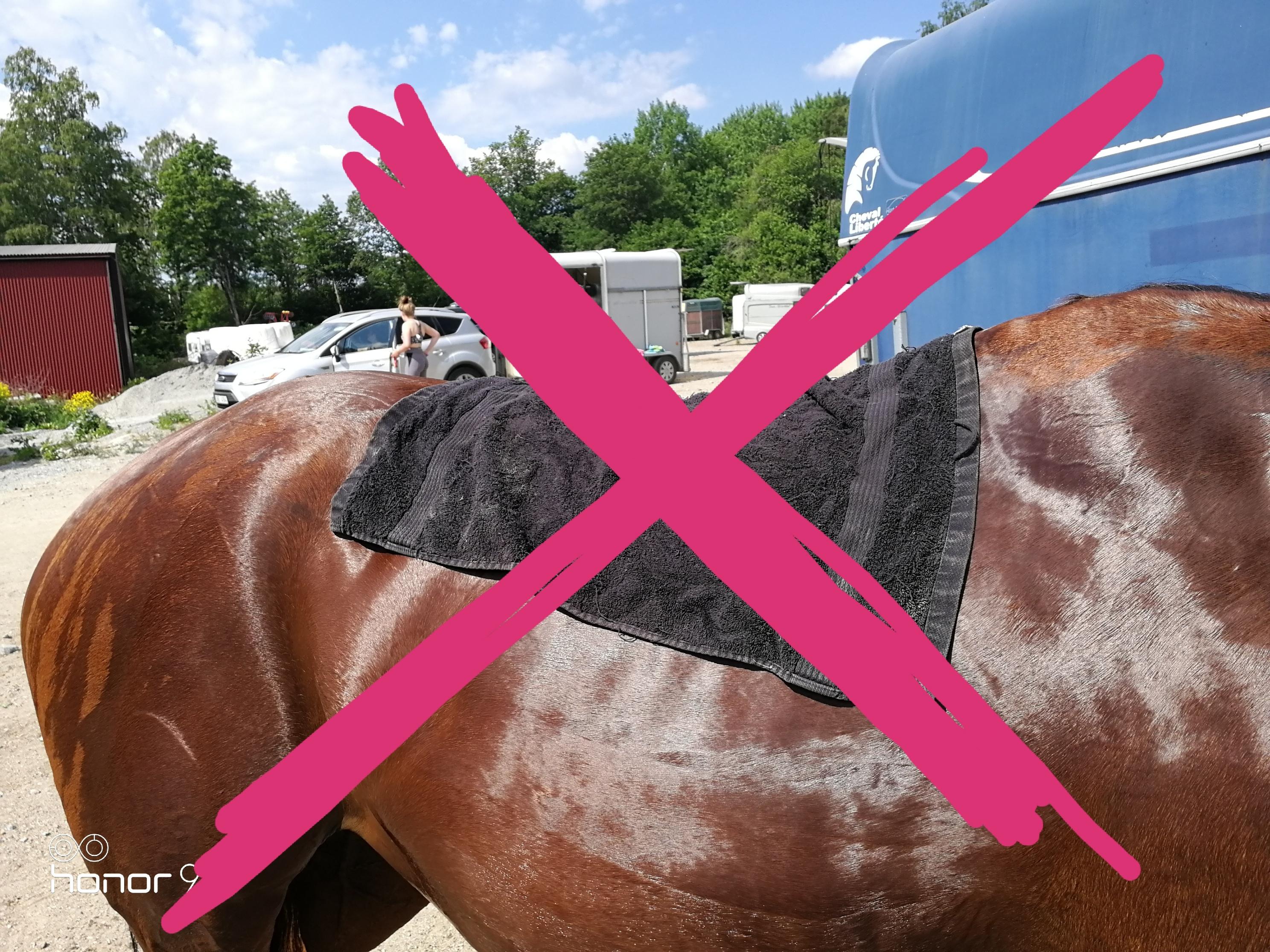 hästen är din